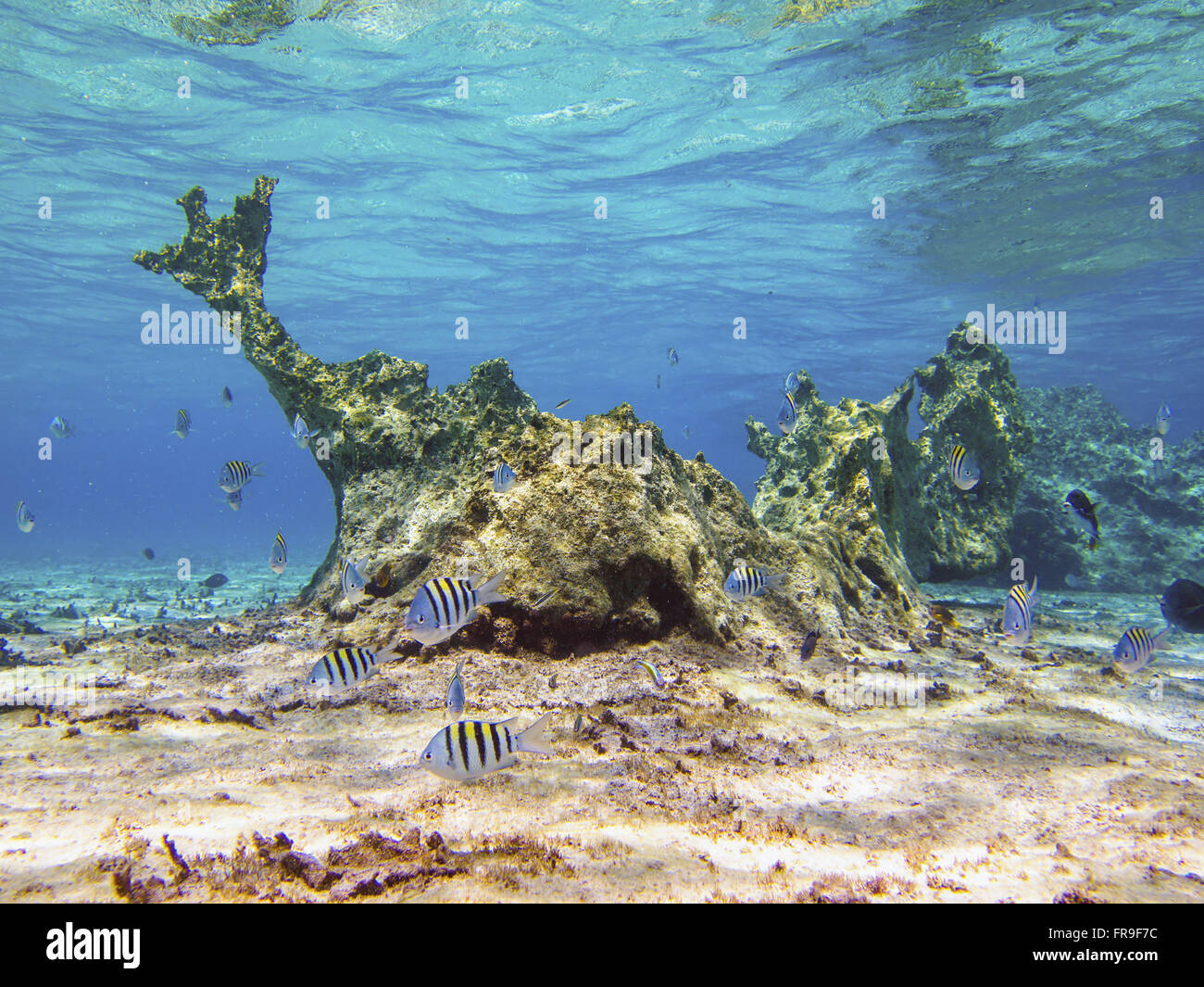 Coral formations in the Biological Reserve of Atol das Rocas Stock Photo