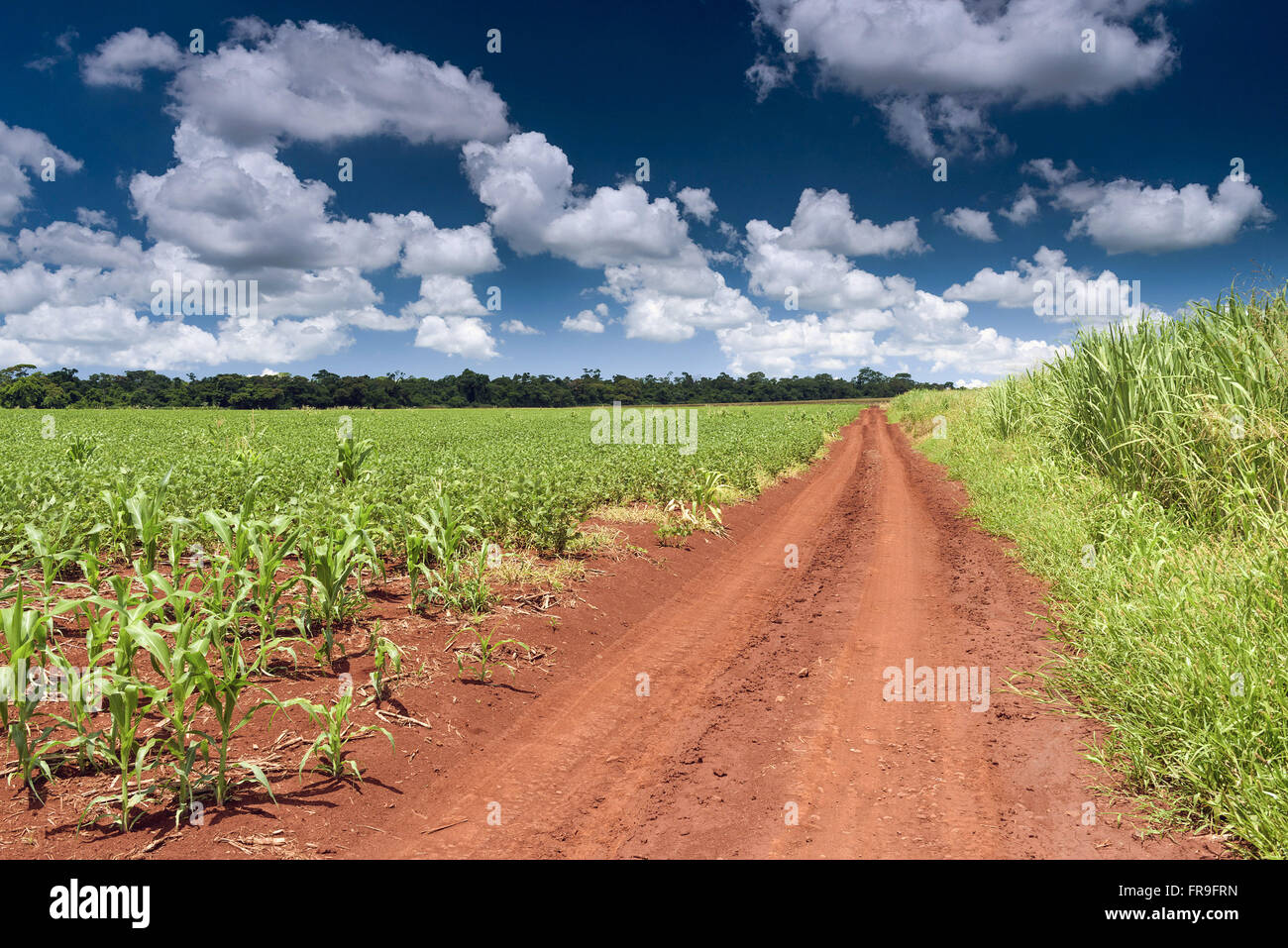 Diverse planting sugarcane, corn and soybeans to the legal reserve fund - Stock Image