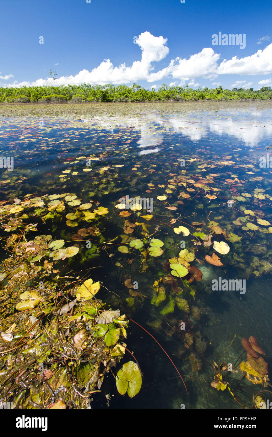 Blue lagoon with sunken garden in the Reserve Indigena Kayabi - Caiabi tribe - Stock Image