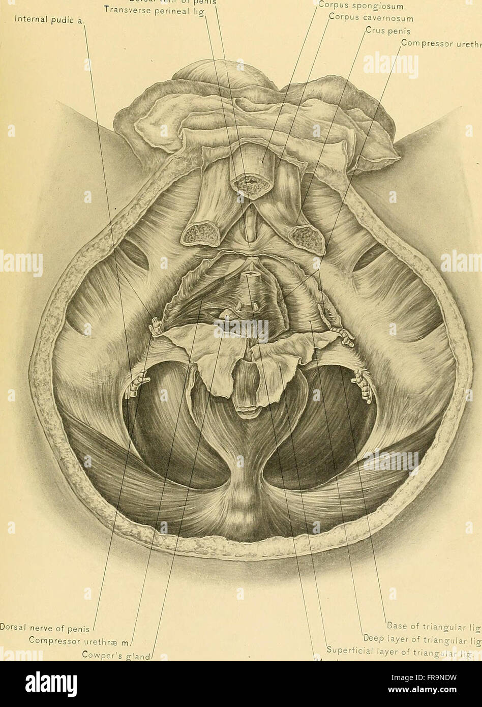 Surgical Anatomy A Treatise On Human Anatomy In Its Application To