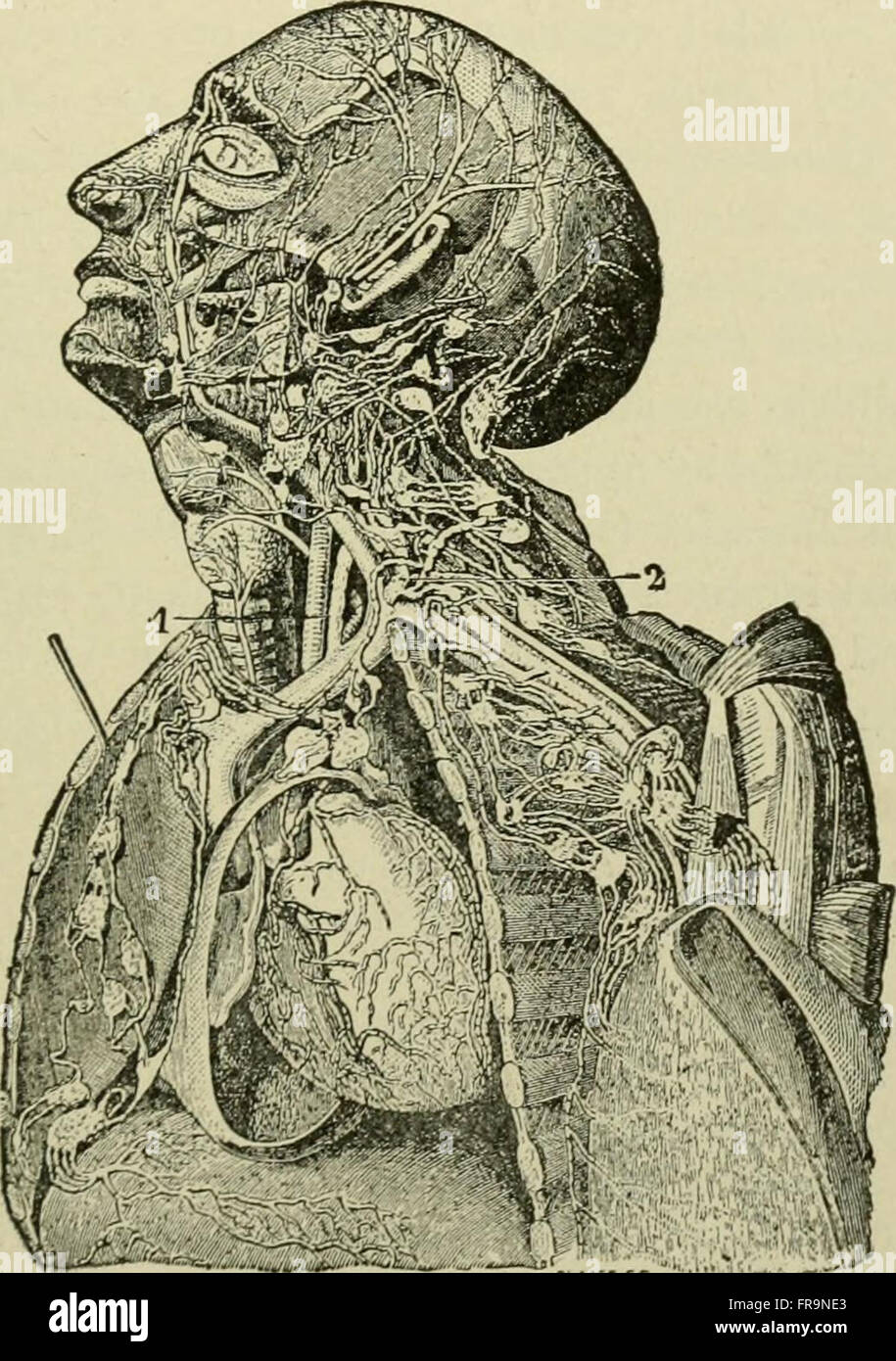 Dorable Anatomy For Nurses Picture Collection - Human Anatomy Images ...