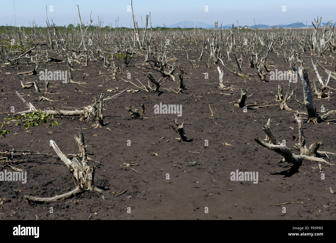 Draft recovery and conservation of mangroves of Guanabara Bay on Mage - Stock Image