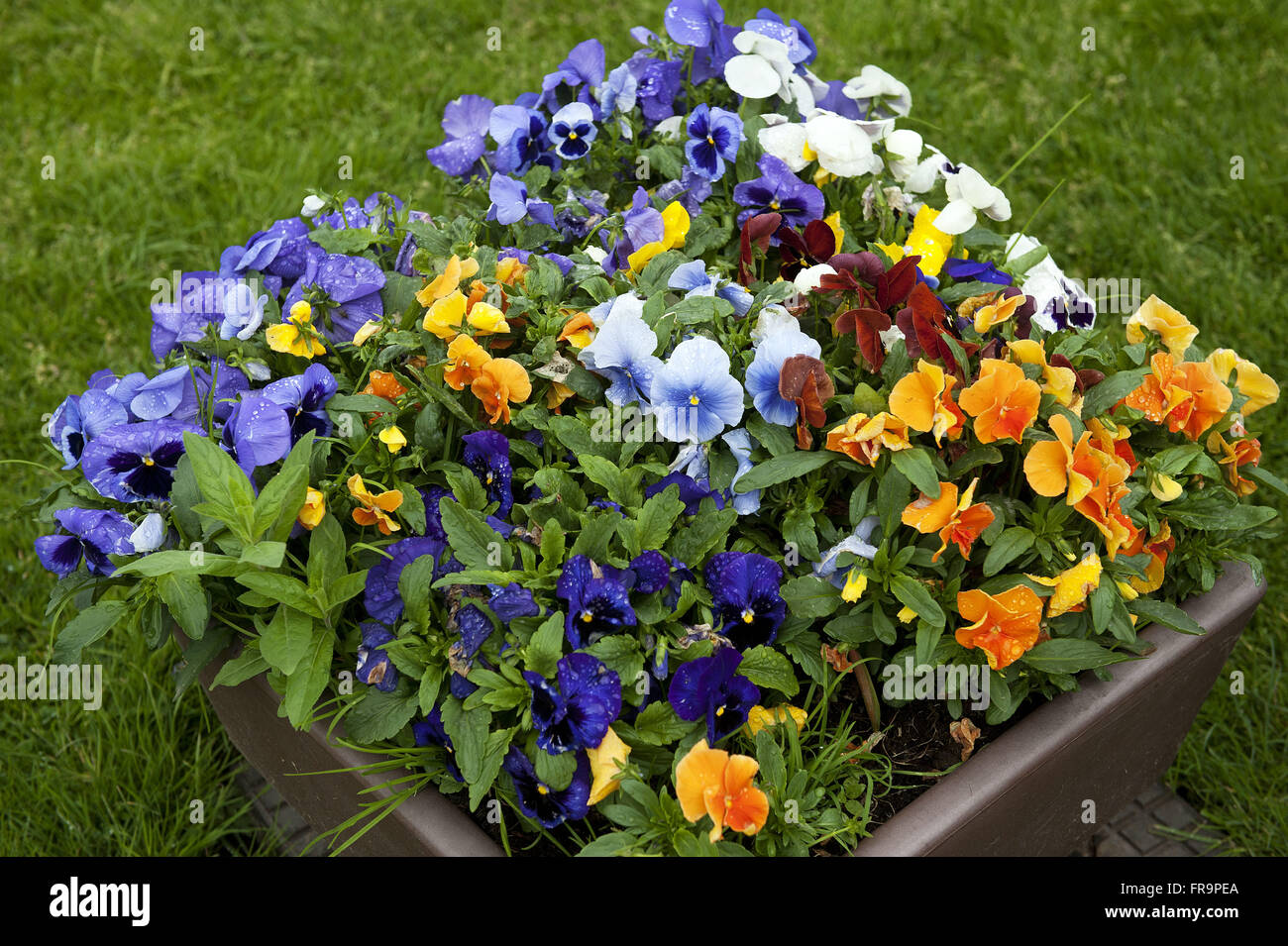 Flowerbed in the village of Zaanse Schans - North Holland - Stock Image