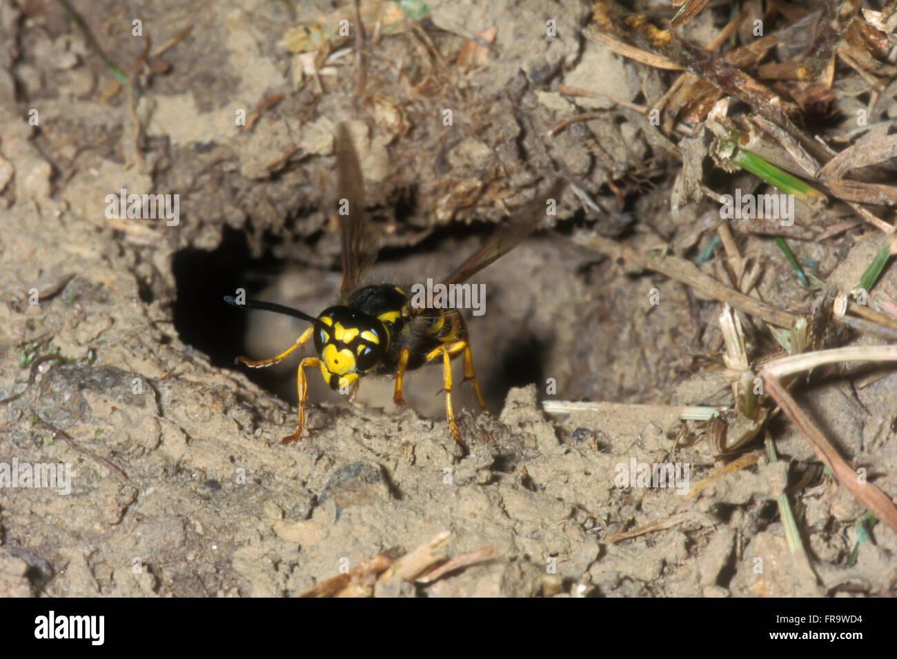 wasp nest in ground - HD1300×956