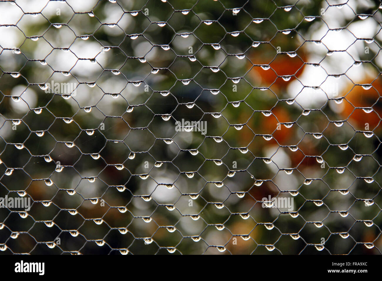 Wire screen with dew drops - Stock Image