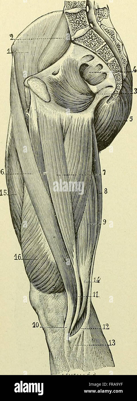 Text Book Anatomy Physiology Nurses 1913 Stock Photos & Text Book ...