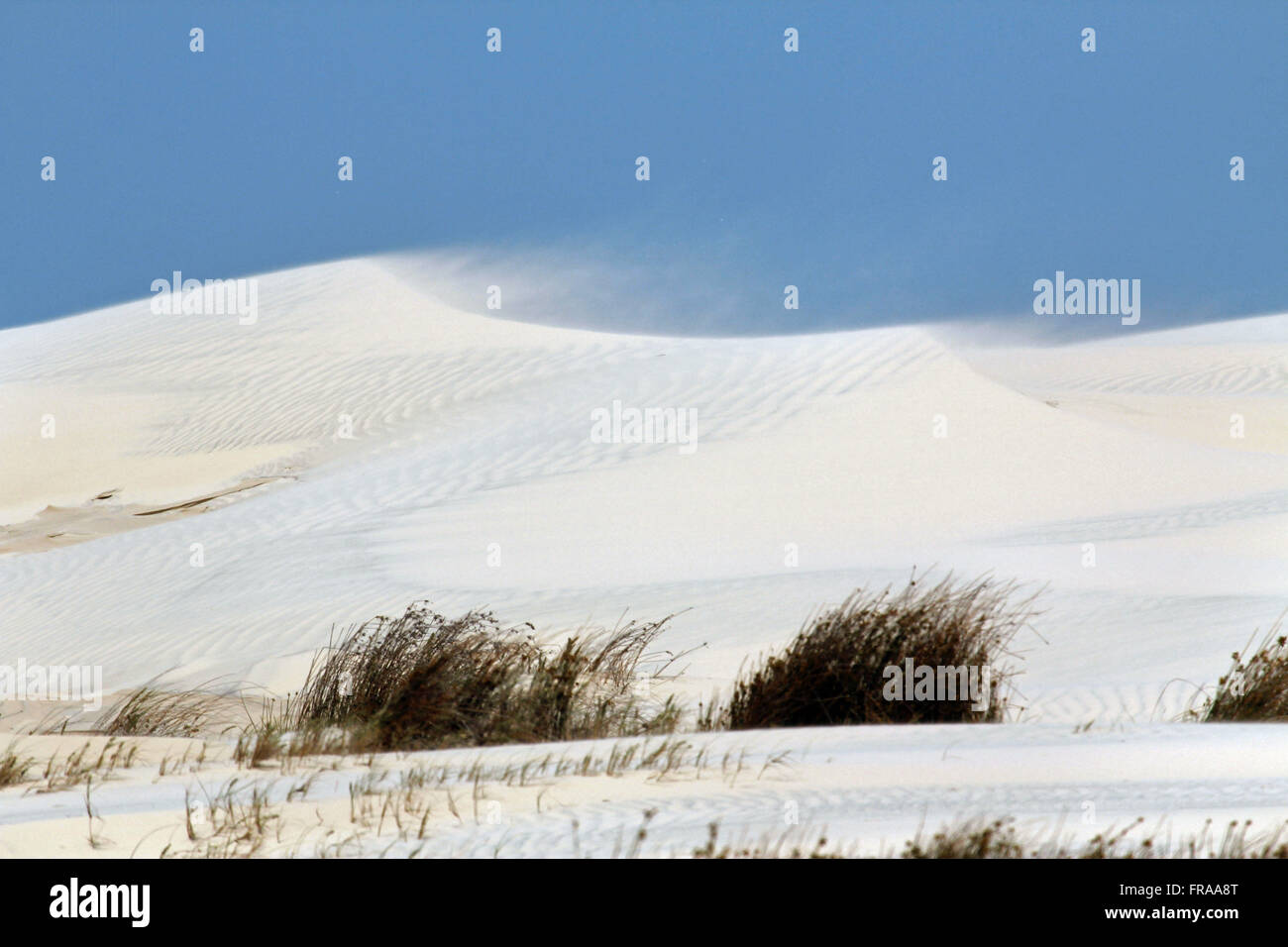 Gale in sand dunes in the municipality of Tavares - RS - Stock Image