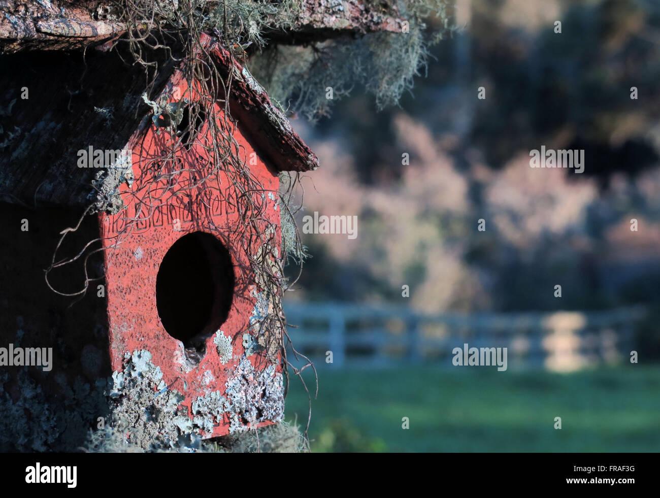 Birdhouse with beard of nerve or beard-of-old - Lageado Grande district - Stock Image