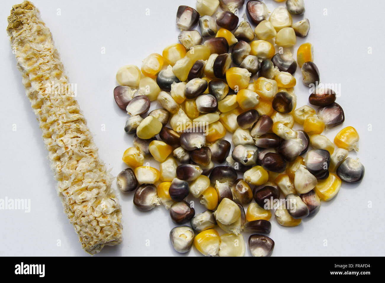 Creole maize - Zea mays - Stock Image