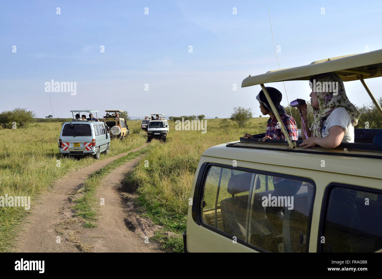 Vans with tourists on safari in the African savannah observation in Maasai Mara National Reserve - Stock Image