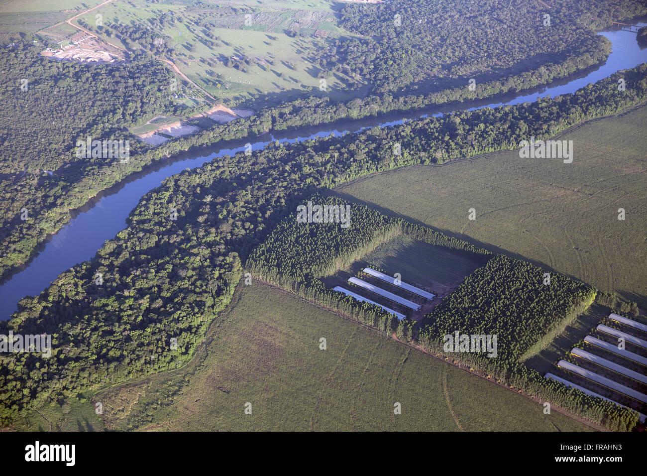 Aerial view of aviary through the plantation of eucalyptus works as insulation phytosanitary - Stock Image
