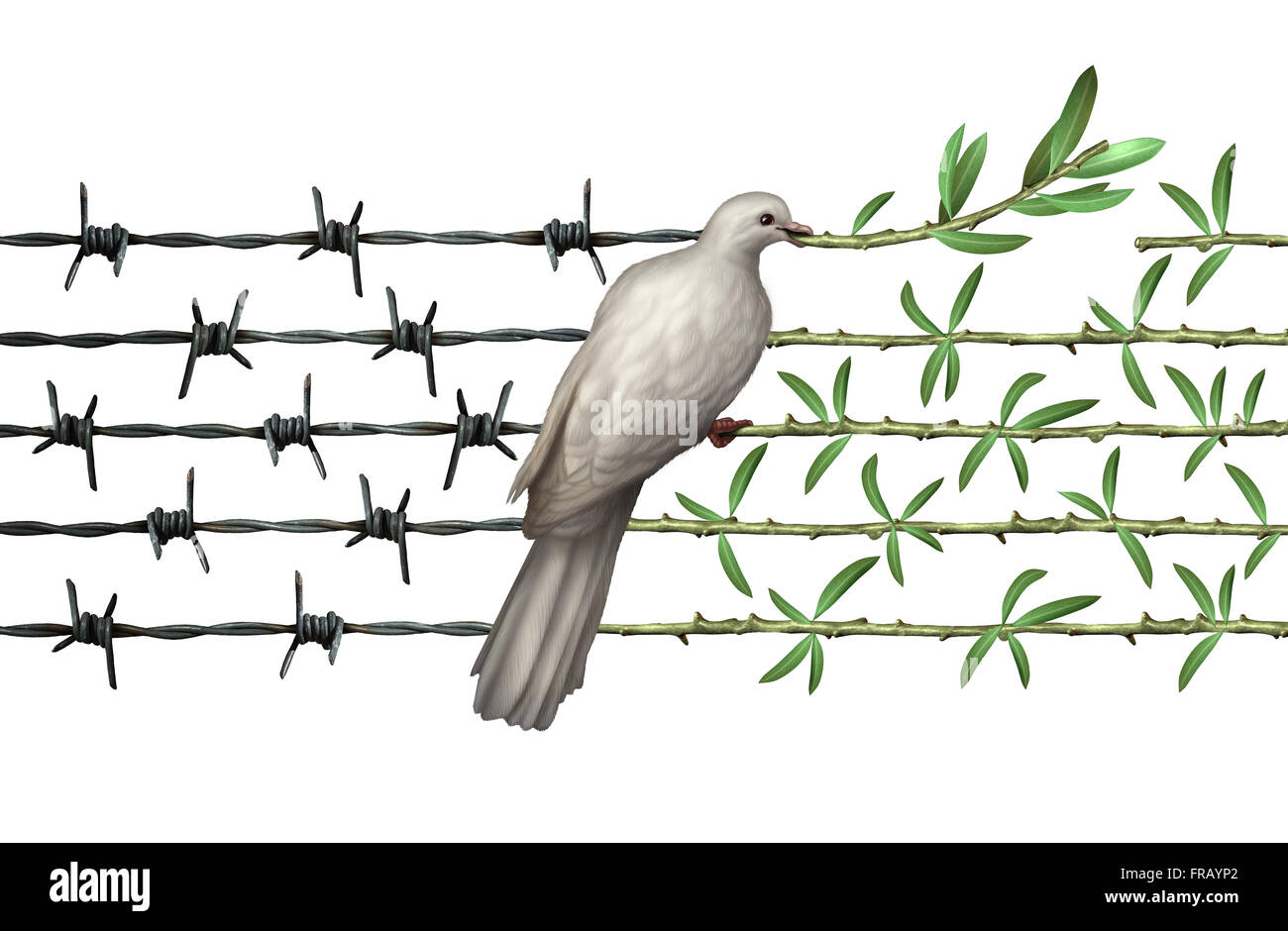 Optimism concept and diplomacy hope symbol as a dove on barbed wire to olive branches as an icon for good will of - Stock Image