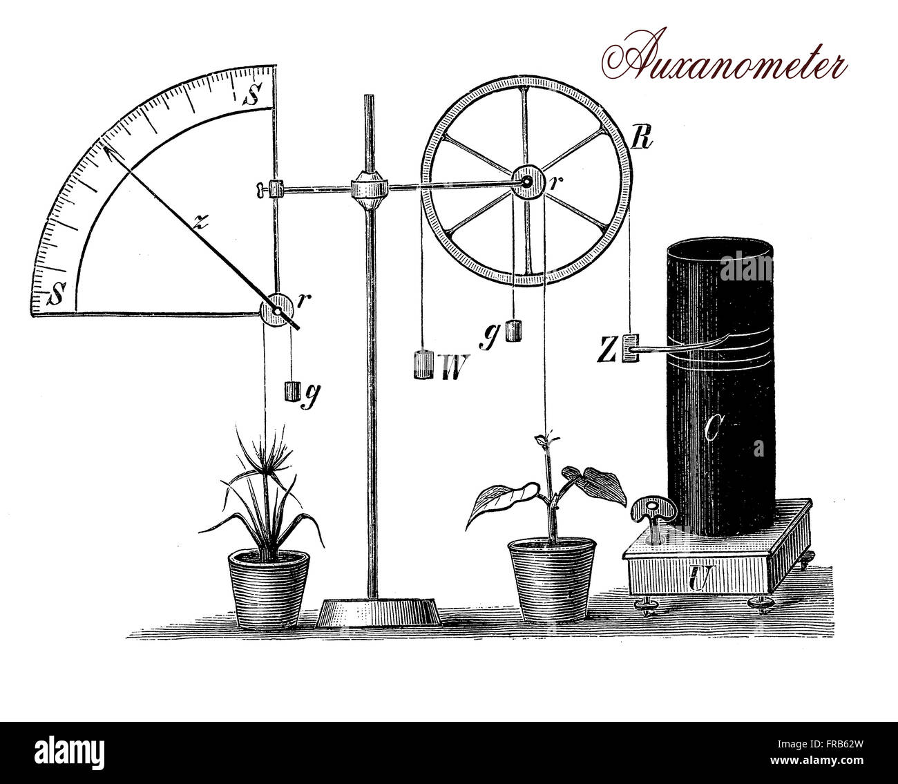 XIX century illustration describing the auxanometer, apparatus for measuring the growth of plants,a wire is fixed - Stock Image