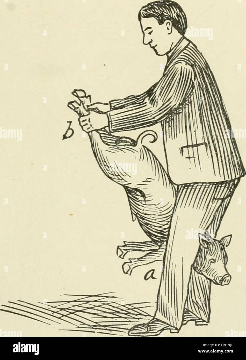 Restraint of domestic animals; a book for the use of students and practitioners; 312 illustrations from pen drawings and 26 half tones from original photographs (1909) Stock Photo
