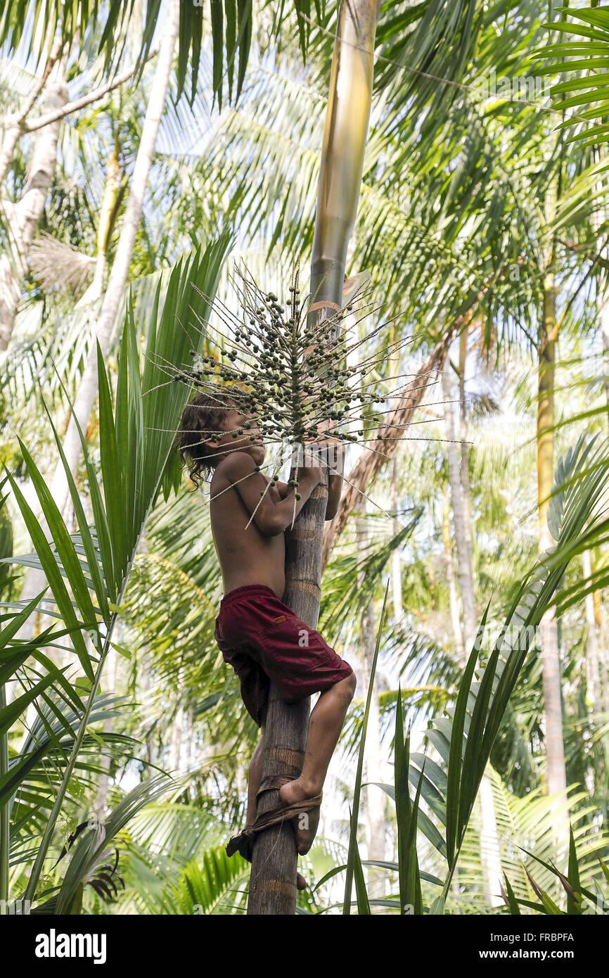 Five year old boy climbing açaizeiro with the aid of peconha - Stock Image