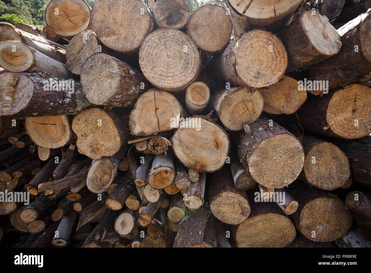 Logs of firewood stacked - Stock Image