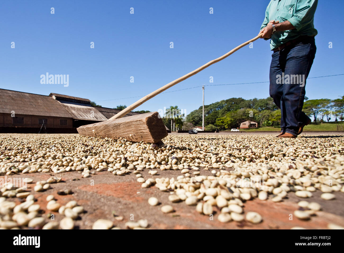 Farm laborer on yard for drying cafe - Stock Image