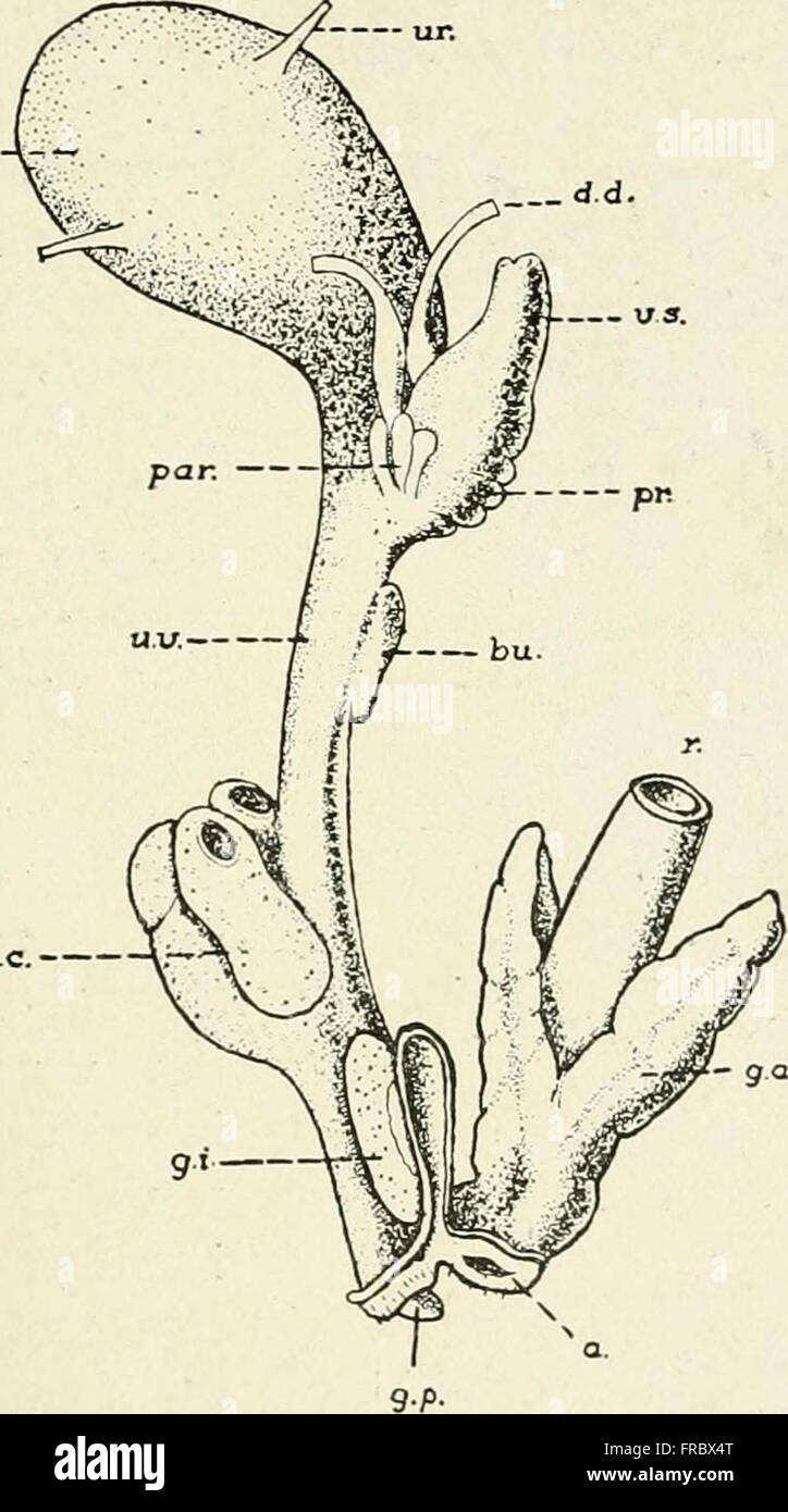 Practical anatomy of the rabbit - an elementary laboratory textbook ...