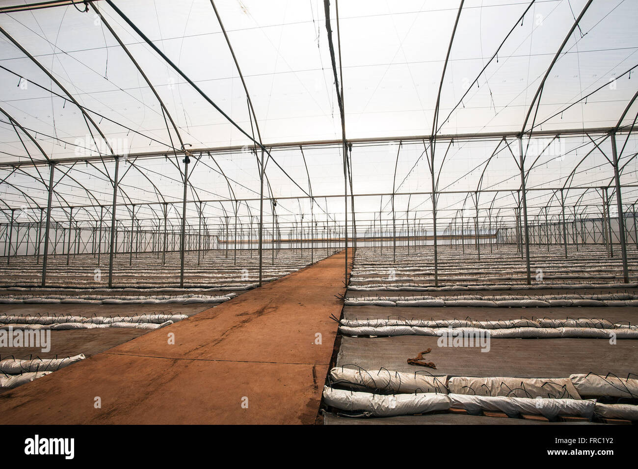 High-tech greenhouse to receive organic planting tomatoes in the countryside - Stock Image