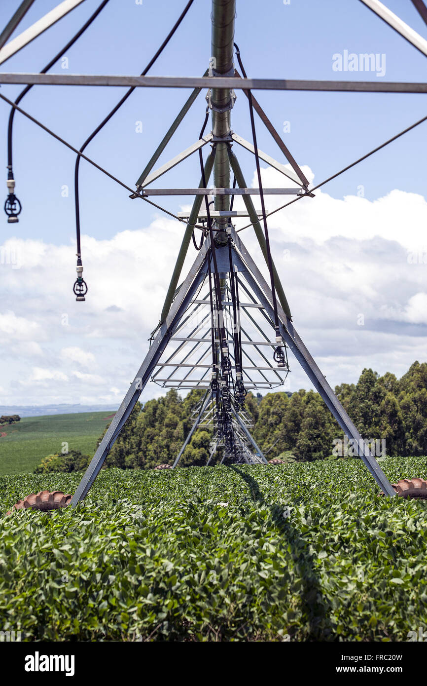 Irrigated soybean field with center pivot in the countryside - Stock Image