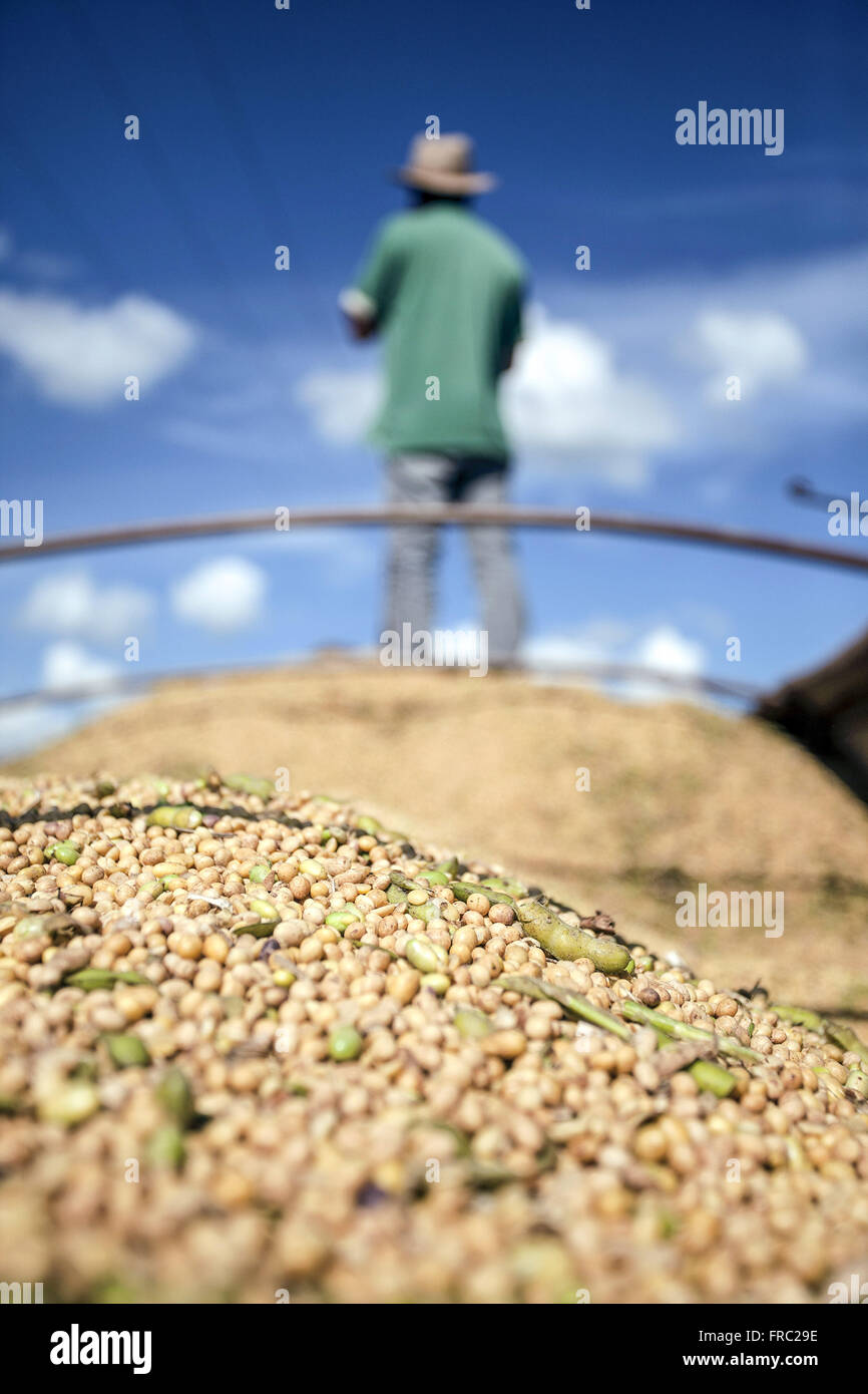 GM soybeans in body with rural workers in the background - Stock Image