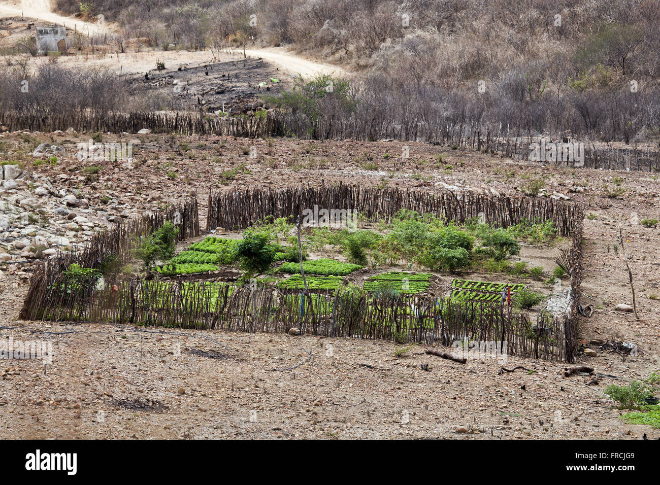 Horta small subsistence farm in the district of Canaan - region of the Pajeú Brushland - Stock Image