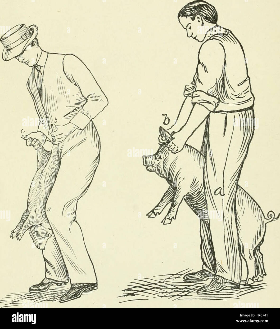 Restraint of domestic animals; a book for the use of students and practitioners; 312 illustrations from pen drawings Stock Photo