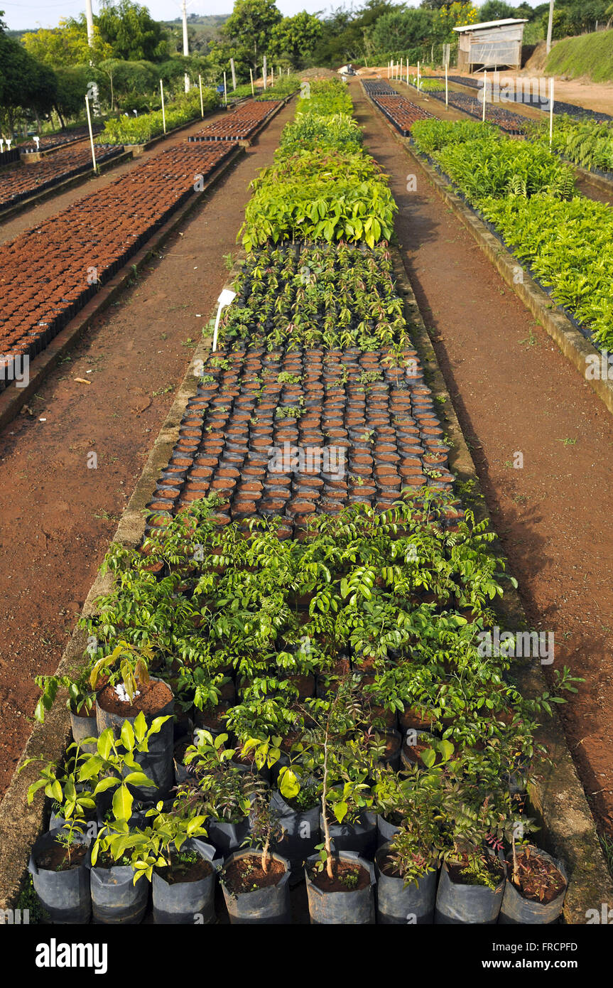 Nursery seedlings of native - Stock Image