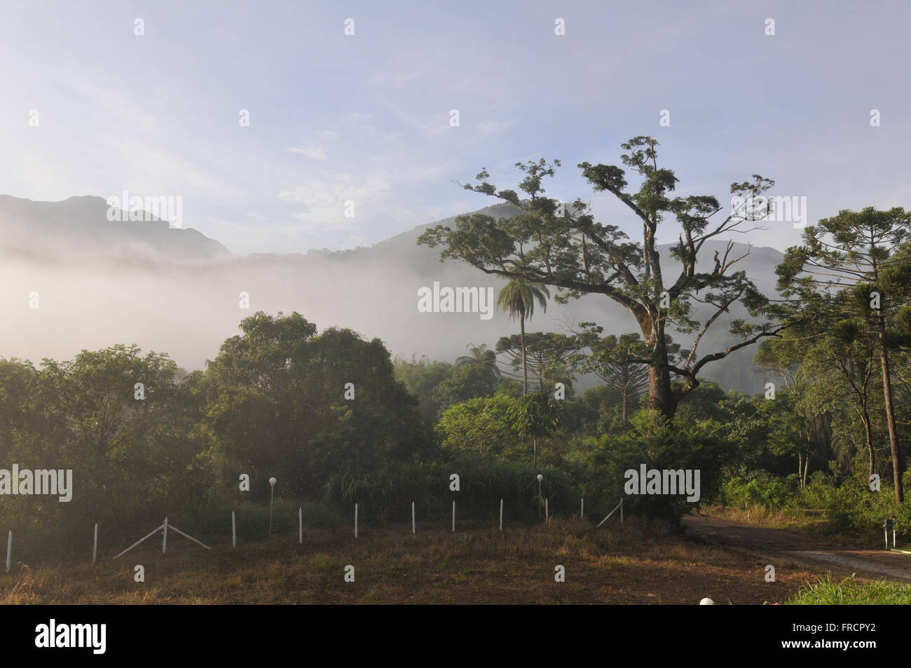 PRNP the Santuario Blimey - area of transition between rain forest and savanna - Stock Image