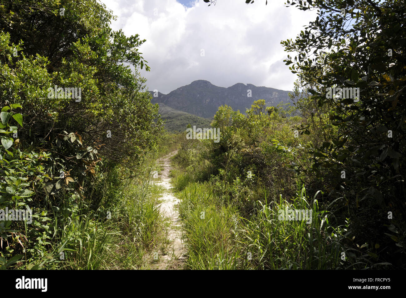Track in the PRNP Santuario Blimey - area of transition between rain forest and savanna - Stock Image