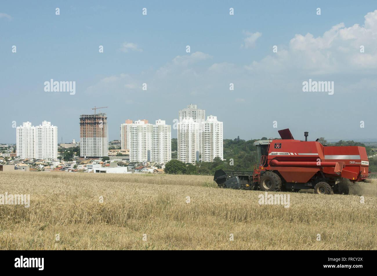 Colheitadeira colhendo trigo em zona urbana - bairro Palhano - Stock Image