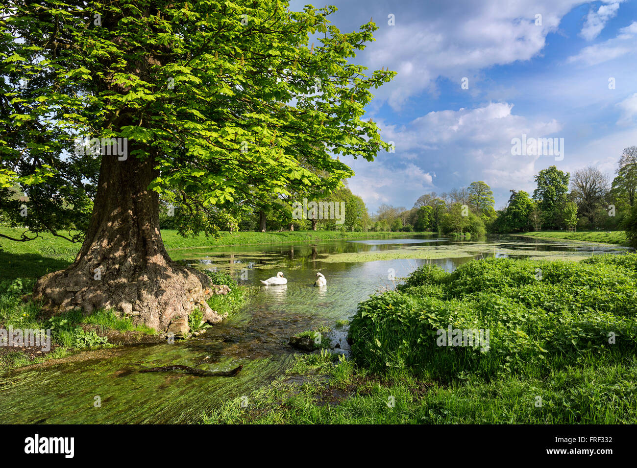Great Missenden Abbey fishpond. The River Misbourne in full flow after the winter rain replenishes the old pond - Stock Image