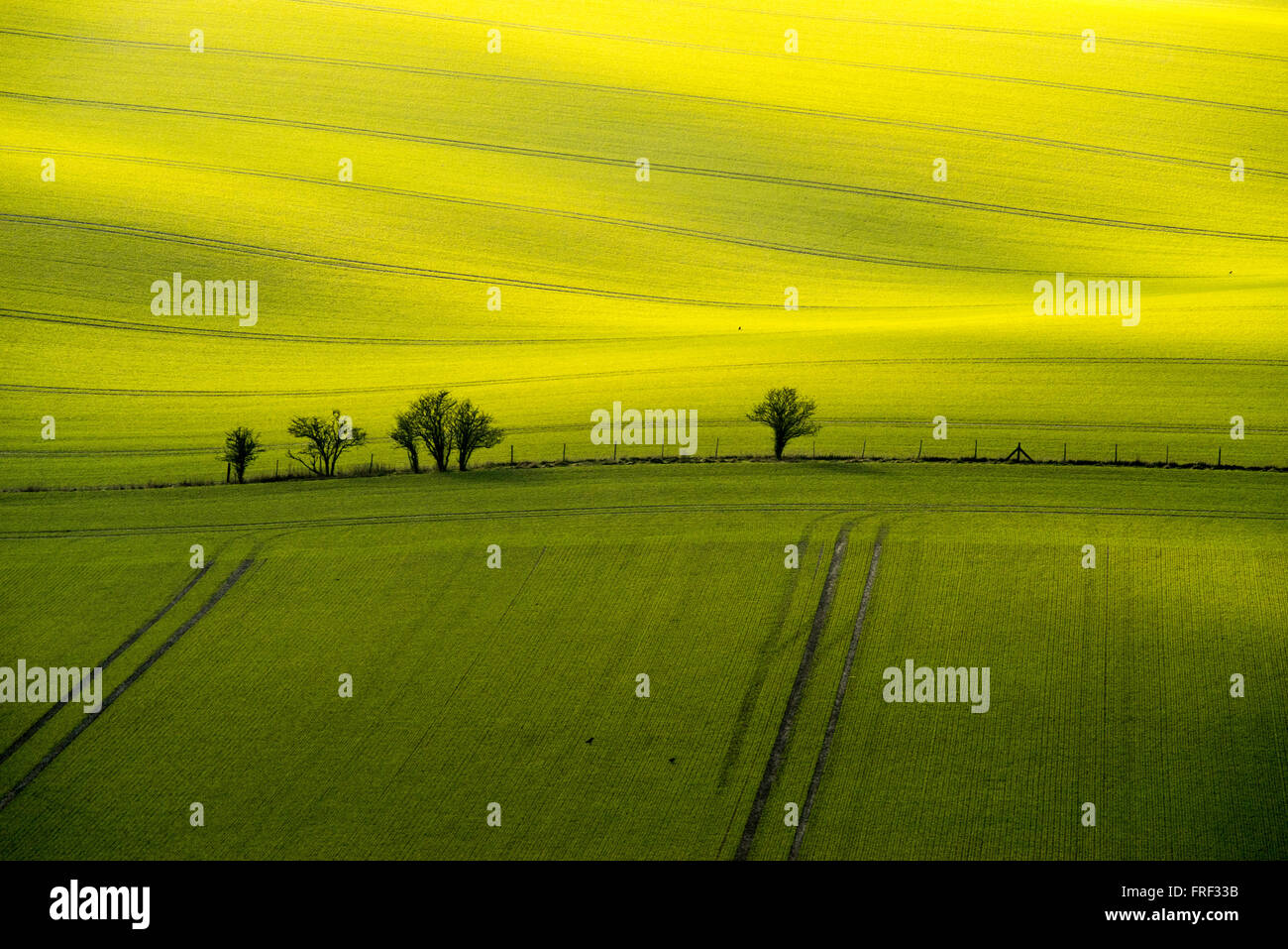Telephoto shot of fields of winter wheat in cloud shaded sunlight, taken from a high hill 'Ivinghoe Beacon' - Stock Image