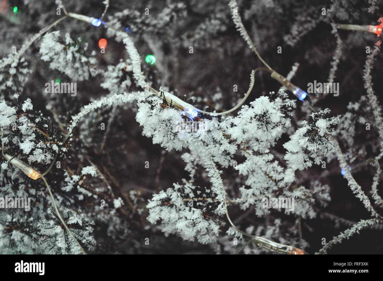 White cristals on the outside christmas tree caused because of snow. - Stock Image