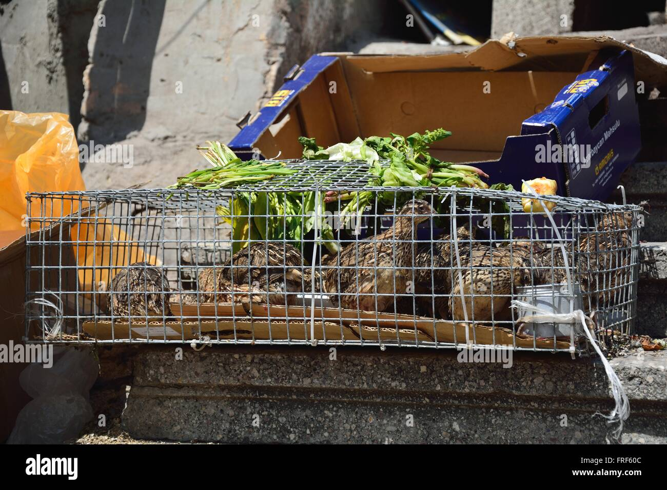 Quails displayed in a cage in a market in Baku, capital of