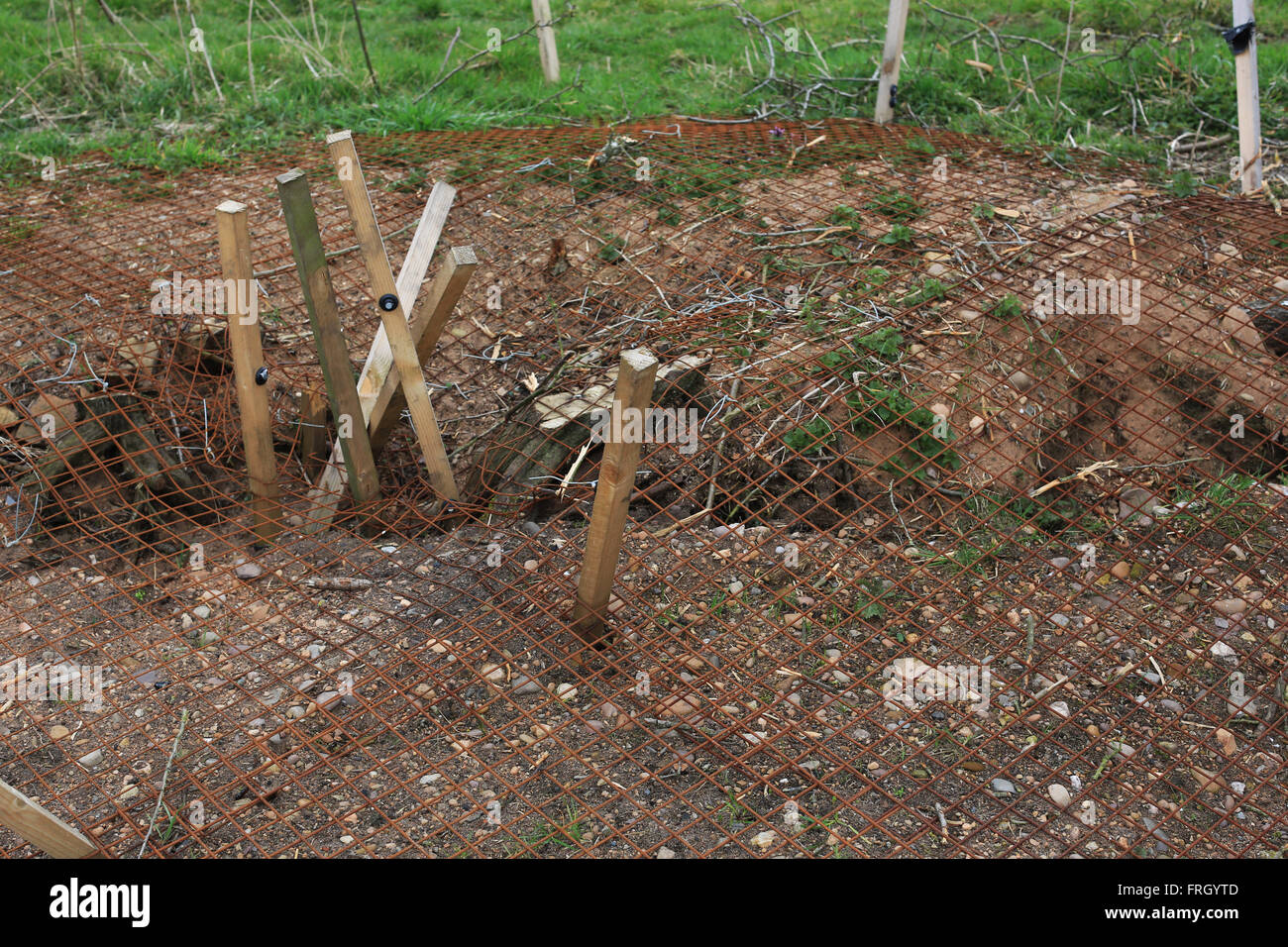 Badger dens destroyed on the site of a controversial rugby club planning application on Doxey Marshes in Stafford - Stock Image
