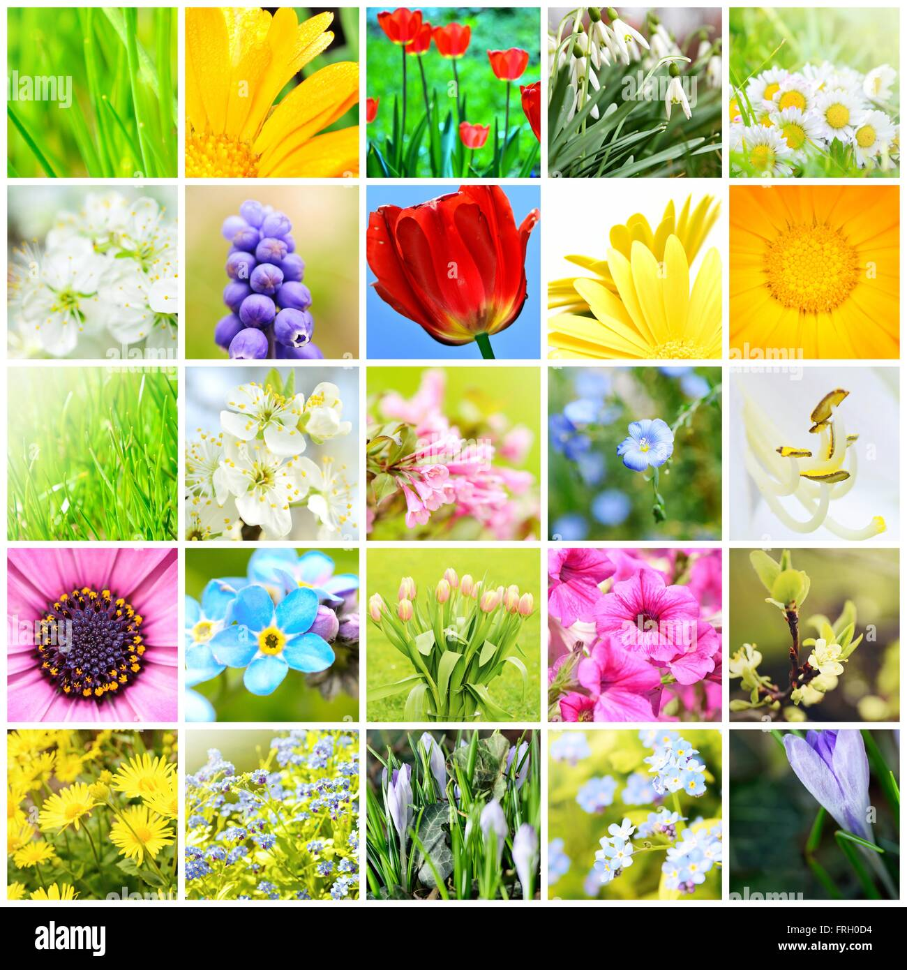 Spring natural abstract collage with plants and flowers in garden a spring natural abstract collage with plants and flowers in garden a spring collection background collage spring theme collage mightylinksfo Gallery