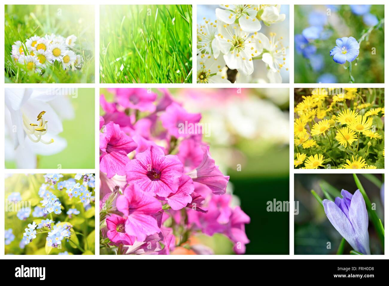 Spring Natural Abstract Collage With Plants And Flowers In Garden A