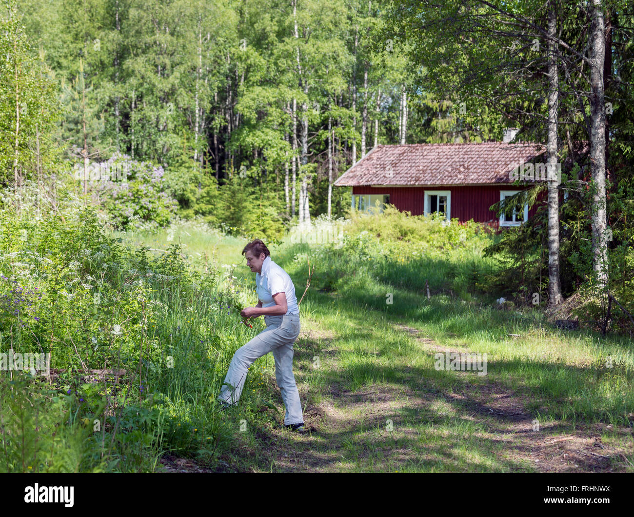 Woman picking flowers at abandoned croft, Sweden - Stock Image