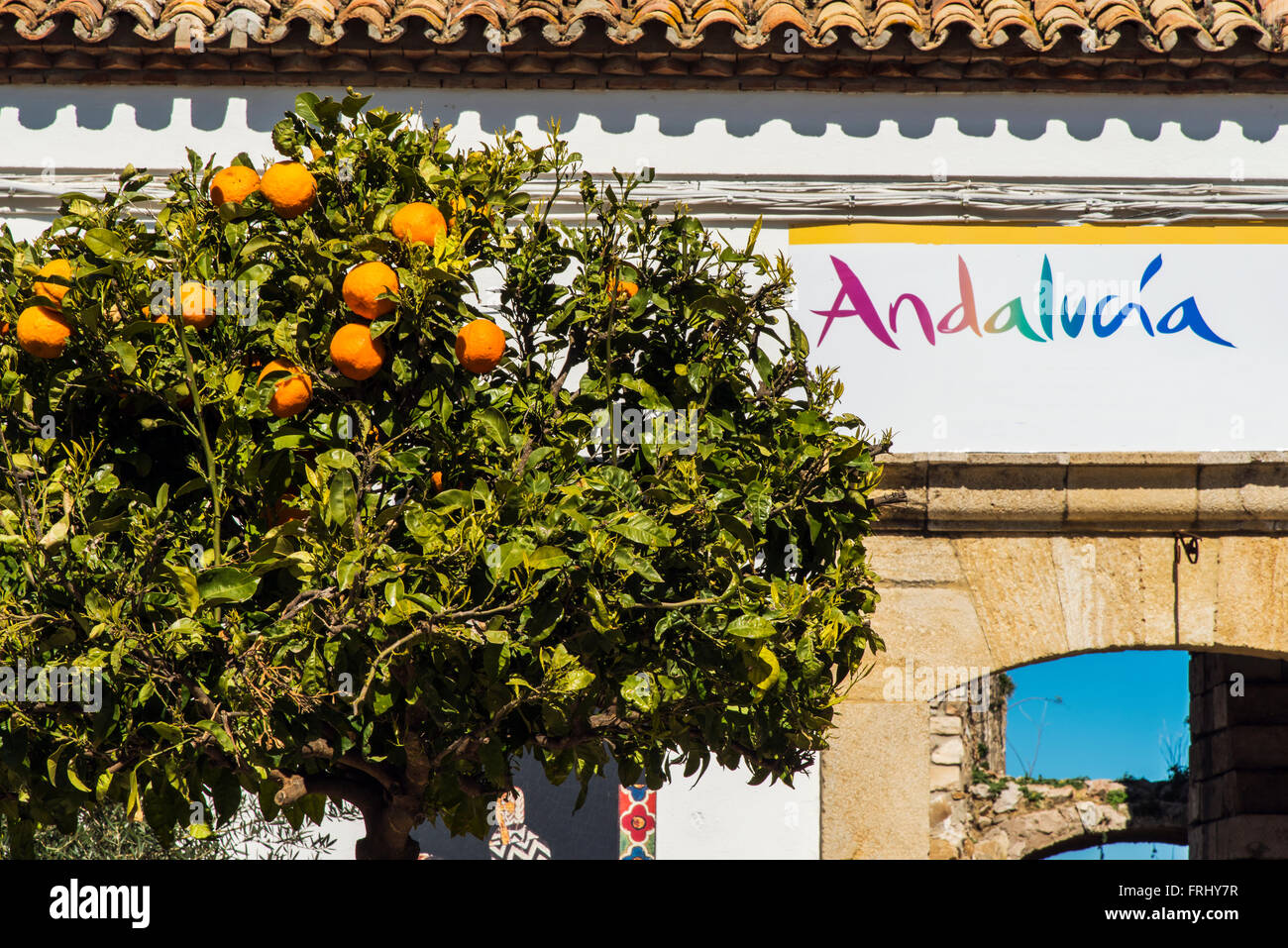 Orange tree, Olvera, Andalusia, Spain Stock Photo