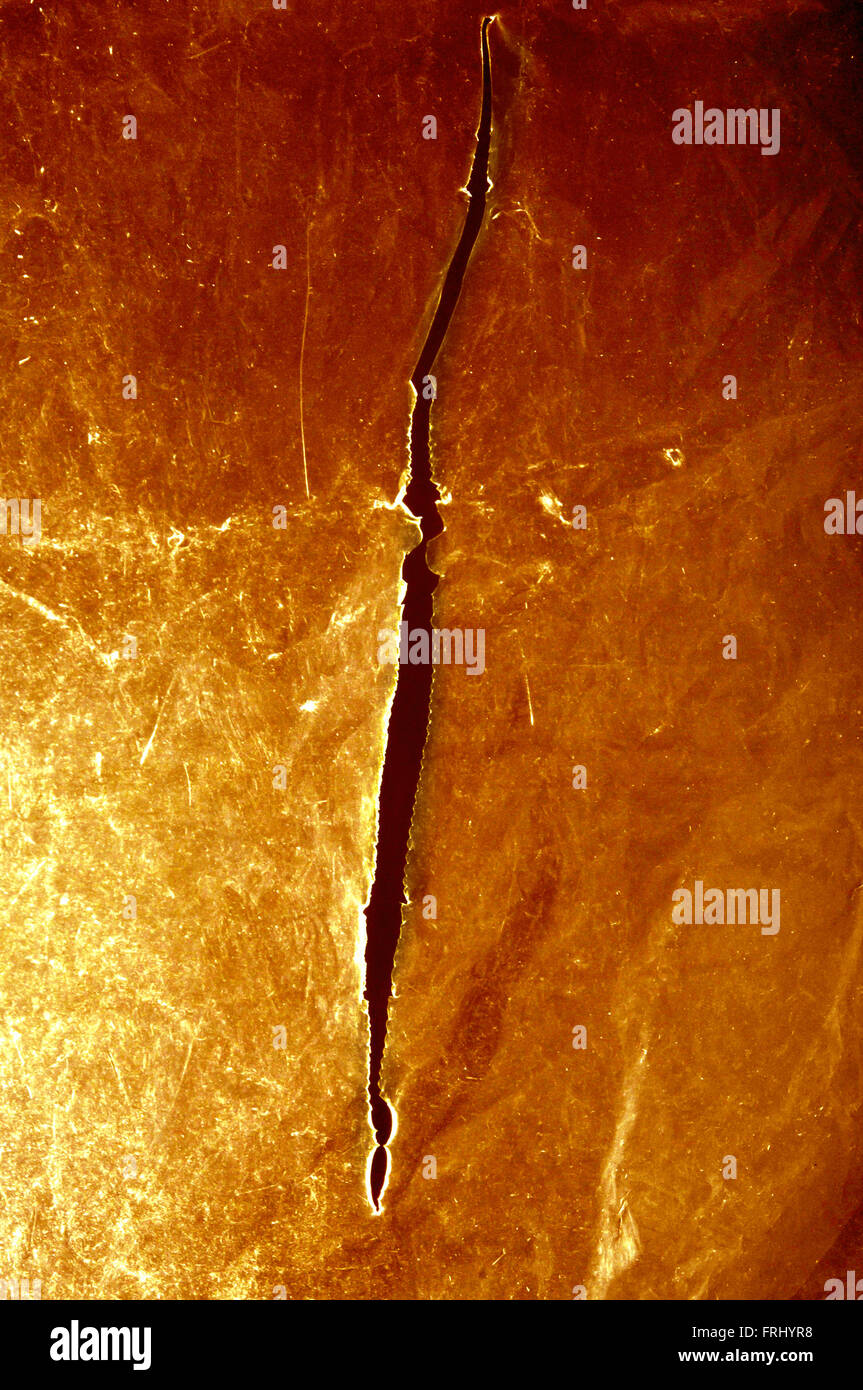 plastic sheet with a cut into it - Stock Image