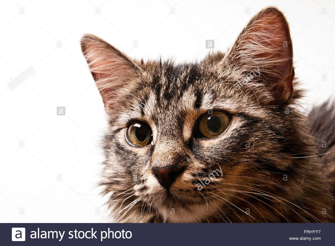 cat face expression - Stock Image