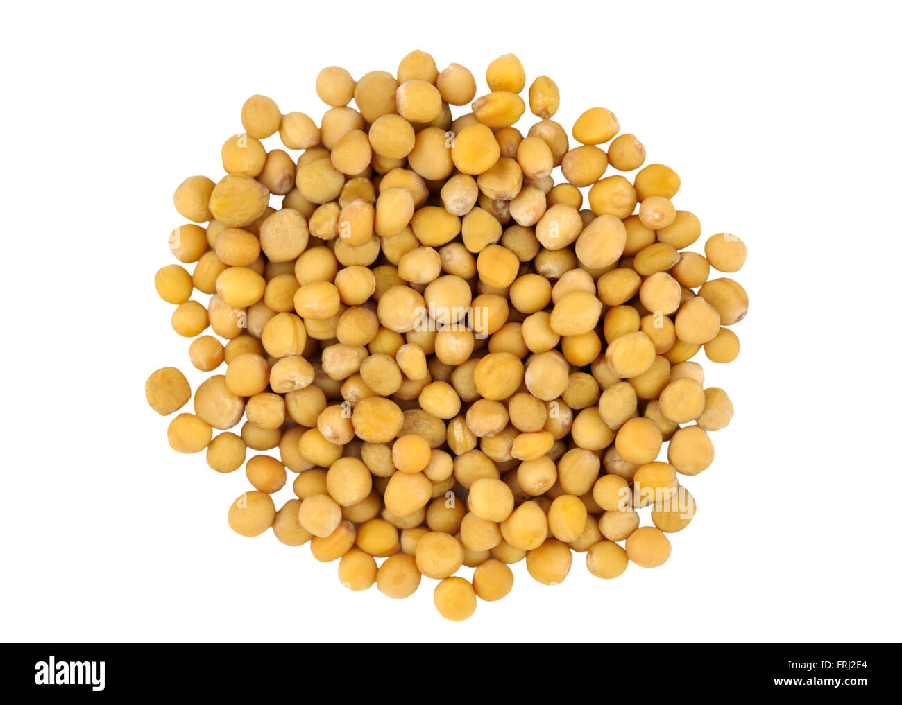 Yellow Mustard seeds also called White Mustard, Sinapis Alba, Brassica Alba or Brassica Hirta. - Stock Image