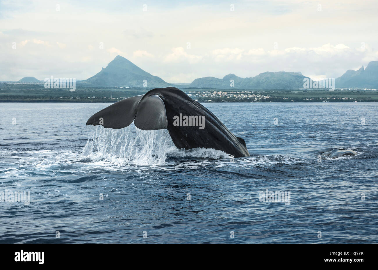 Whale watching, Mauritius - Stock Image