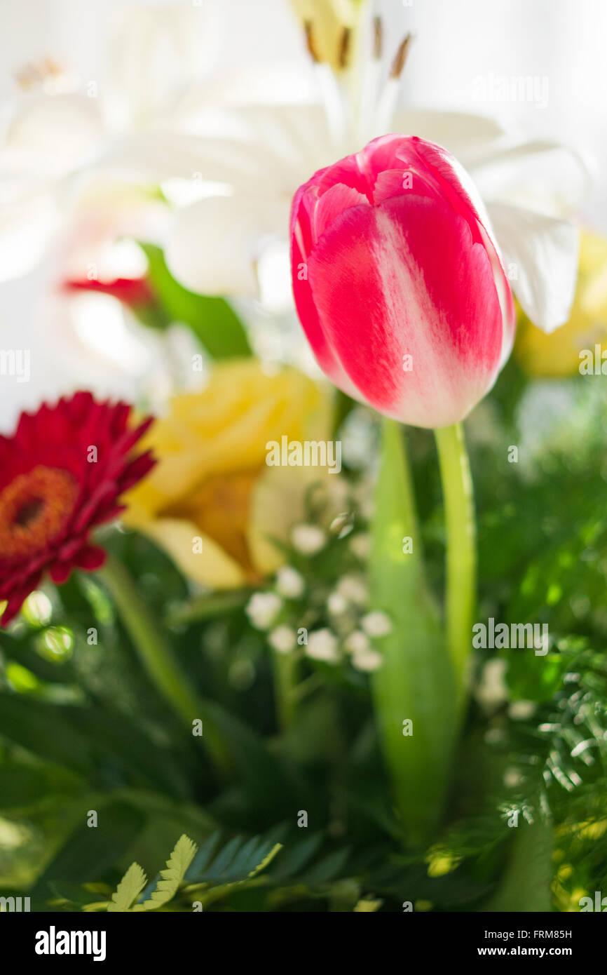 Flower bouquet closeup against blurry background. - Stock Image