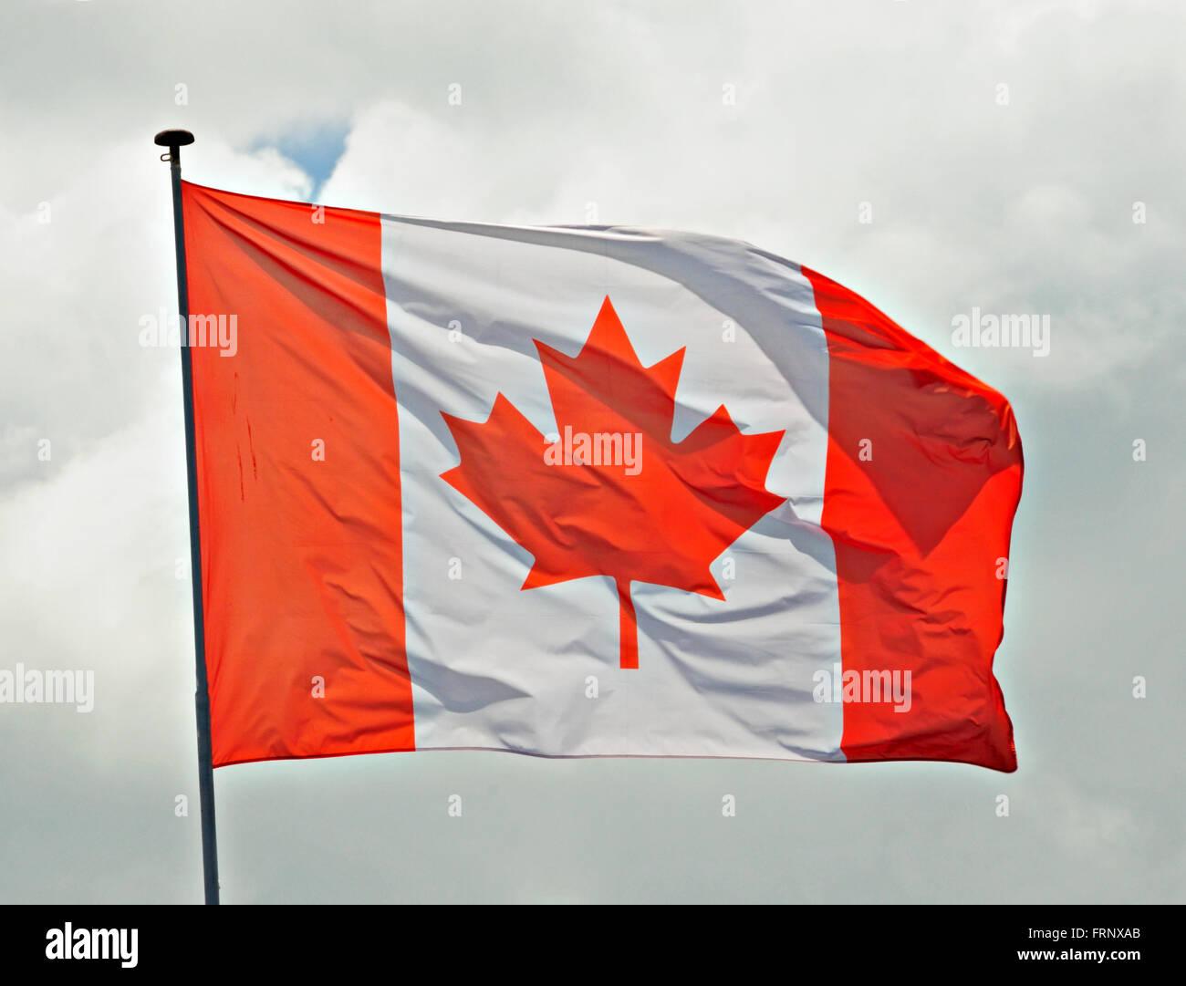 Canadian Flag fluttering in a brisk breeze. - Stock Image