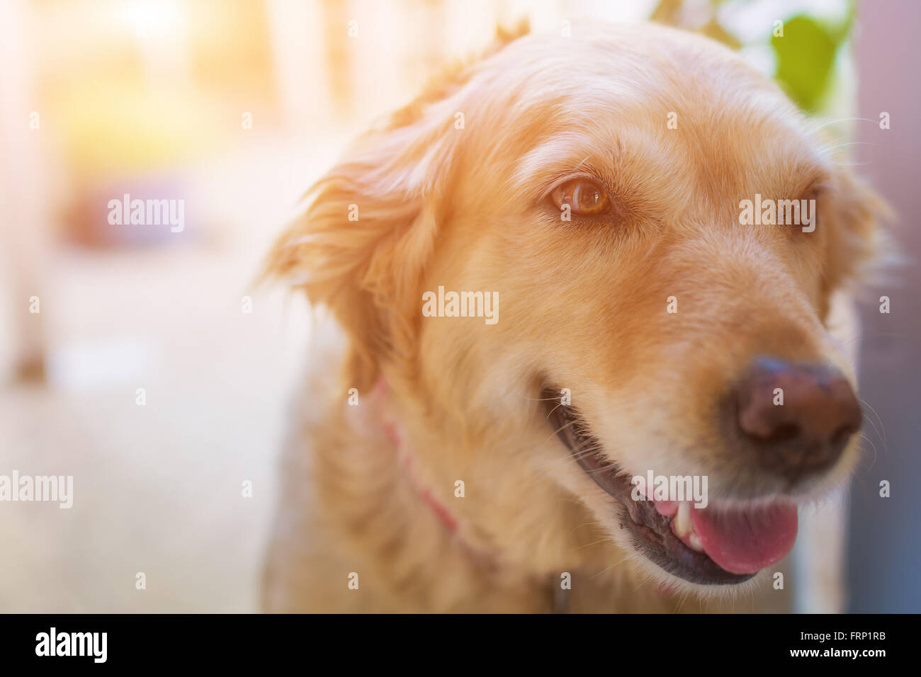 Portrait of a  dog - Stock Image