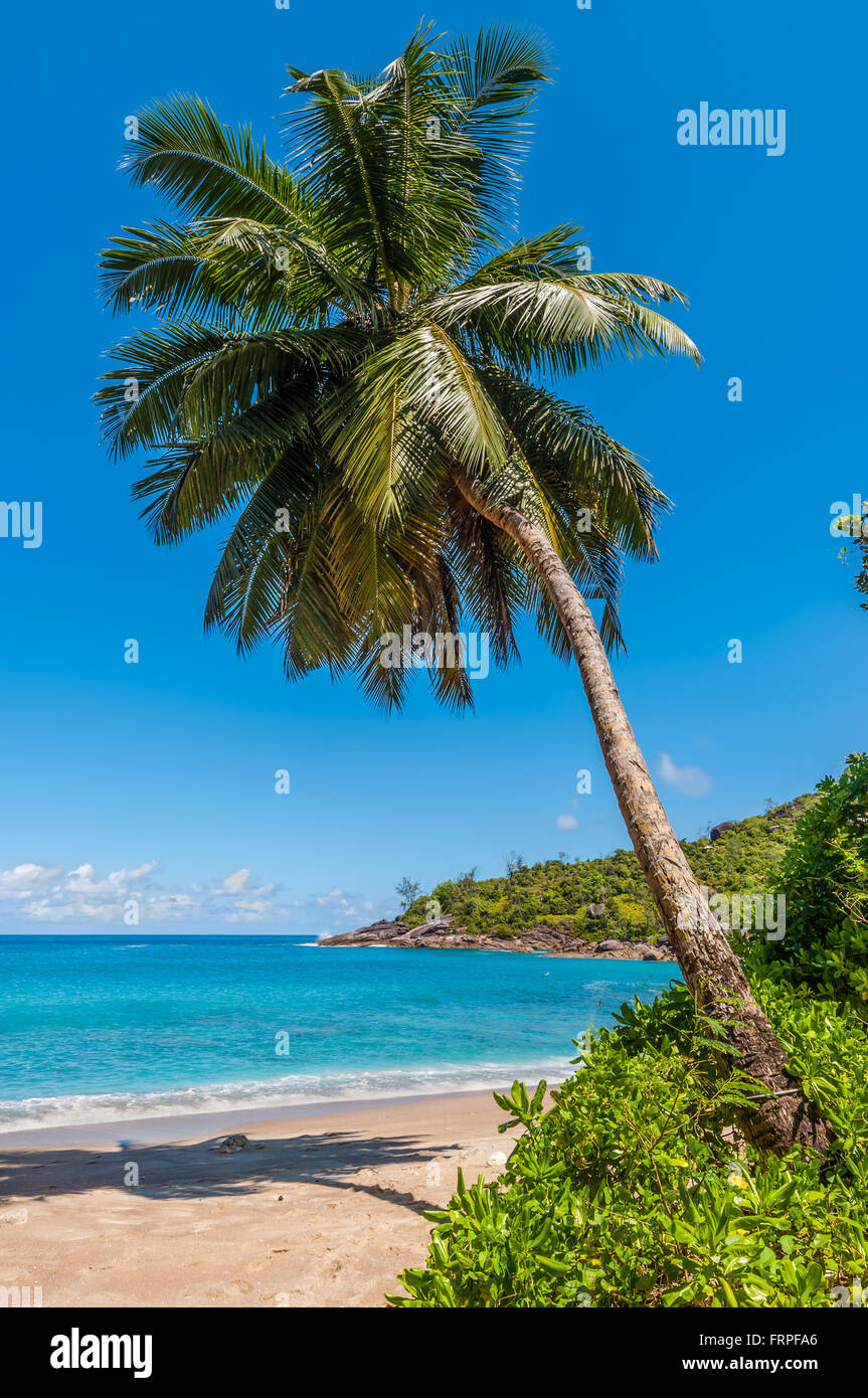 Idyllic paradise palm Anse Mayor beach on the North-West side of Mahe Island near the town of Bel Ombre, Seychelles - Stock Image