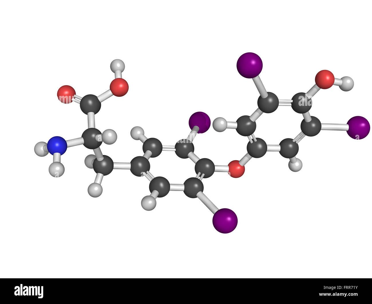 Thyroxine Thyroid Gland Hormone Molecule Thyroxine Is A Thyroid