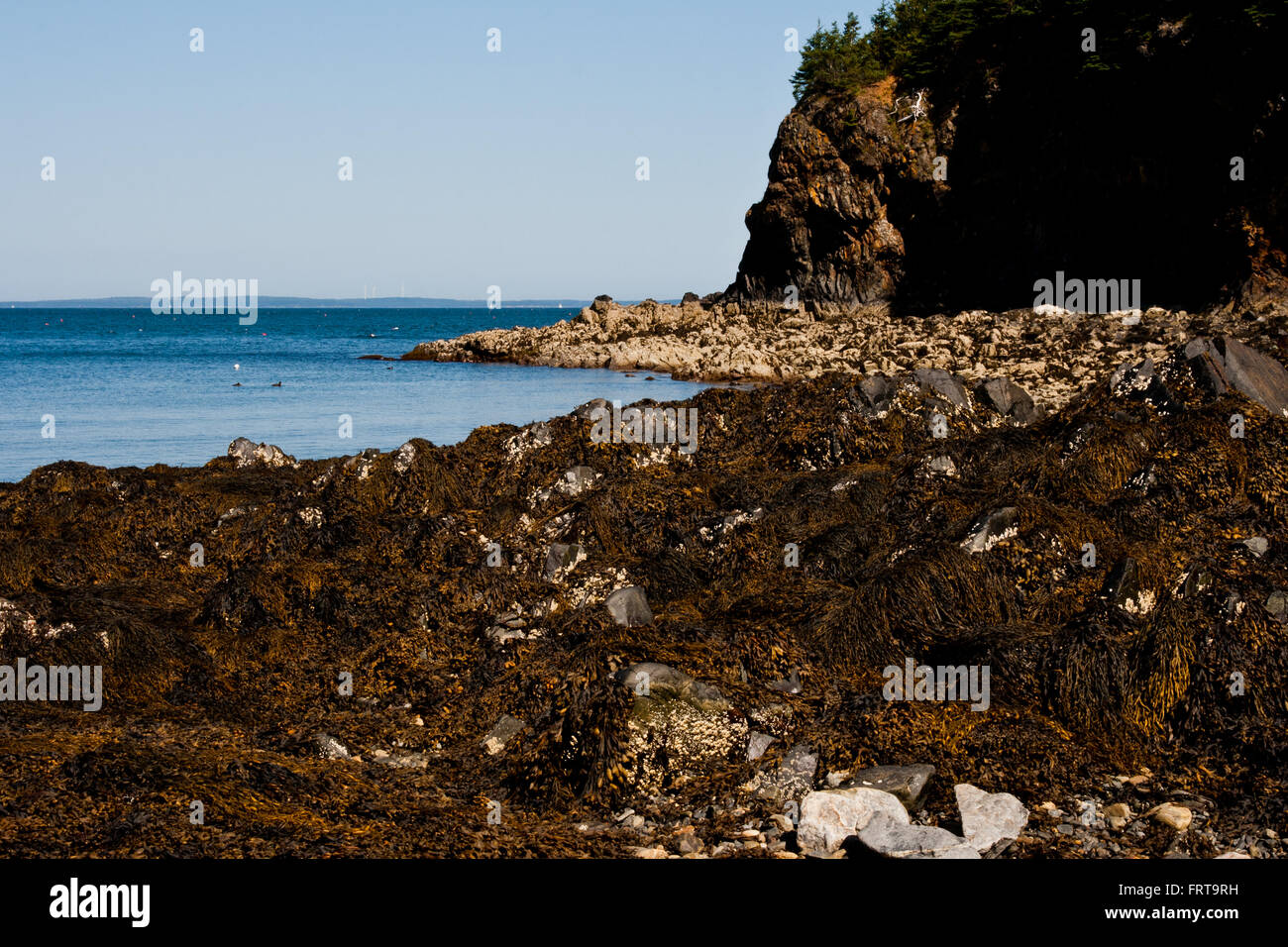 Jagged seabed along the coast of Camden Maine. - Stock Image